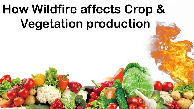 How Wild Fire Affect crop and vegetation Production