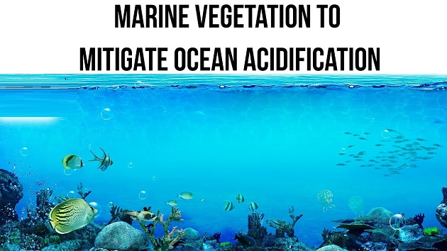 Marine Vegetation To Mitigate Ocean Acidification