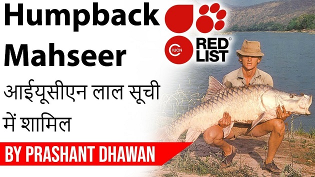 Humpback Mahseer Fish included in Critically Endangered list by IUCN
