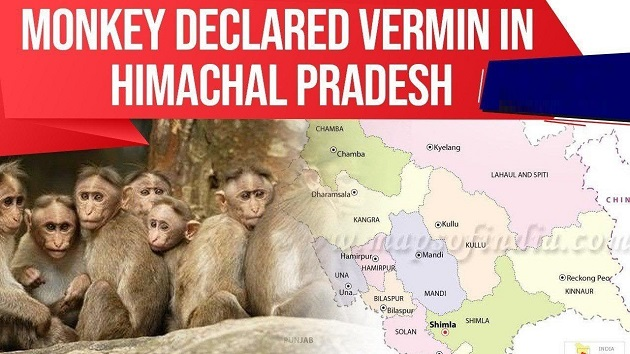 Monkey declared Vermin in Himachal Pradesh