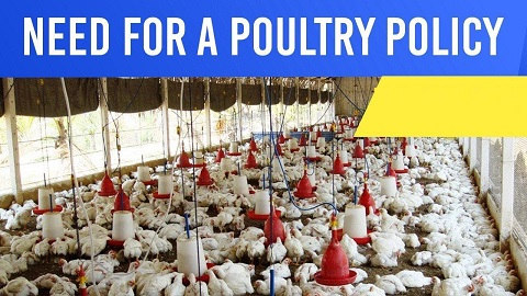 Why India needs a new Poultry Policy?