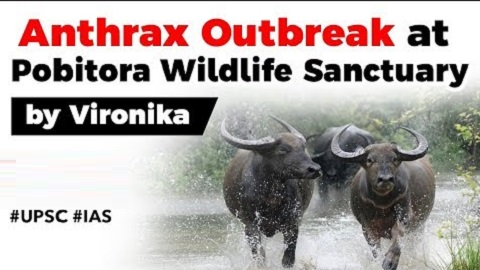 Anthrax outbreak in Pobitora Wildlife Sanctuary, Two affected buffaloes died