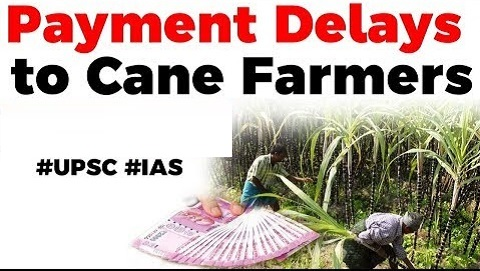 Payment Delays to Sugarcane Farmers