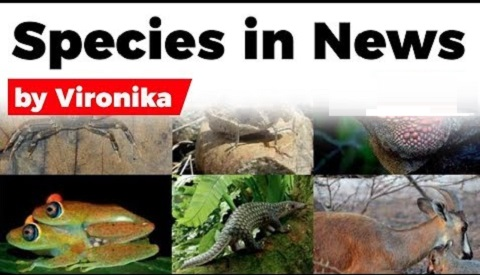 Species in News from June to October 2019