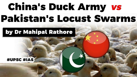 China's locust eating duck army to help Pakistan, Is it good way to control locust swarms?