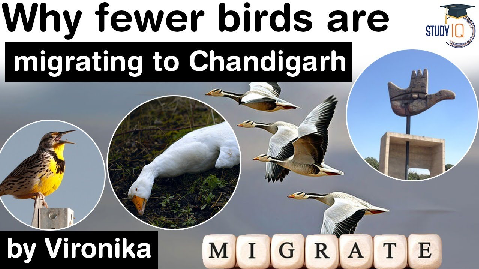 Migratory Birds in Chandigarh – Why fewer birds are migrating to Chandigarh? Bird Census Key Points